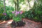 le parc botanique de Singapour