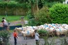 Le passage des moutons