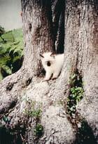 Le petit chat gris