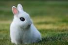 Le petit lapinou...