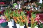 Le petit marché aux fleurs de St Denis