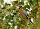 Le petit oiseau aux ailes bleues