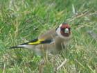 Le petit oiseau de toutes les couleurs