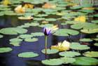 le plan d'eau du Conservatoire botanique de Mascarin