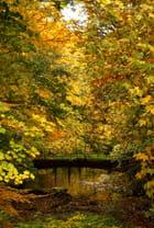 Le pont vers l'automne