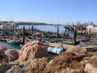Le port de pêche d'Agadir