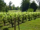 Le potager et la ferme de Marie-Antoinette