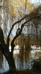 le printemps sur les bords de Seine