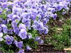 Le printemps vient d'arriver, avec ses jolies fleurs