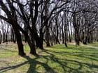 le reflet des arbres