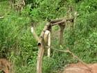 Le robinet laotien