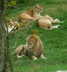 Le roi et son harem