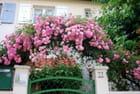 le roses de juin