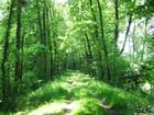 Le sentier forestier