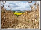 Le sillon dans le blé