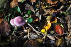 Le trésor de l'automne