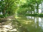 Le vert canal