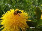 Les abeilles sont là