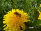 Les abeilles sont revenues