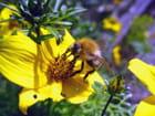 Les abeilles sont toujours là