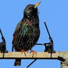 les antennistes FREE sont prèts !!!