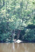 les arbres au bord de l'eau