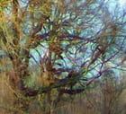 Les arbres colorés