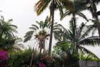 les arbres de La Réunion