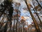 Les arbres se décoiffent