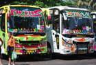 les autobus de Cochin