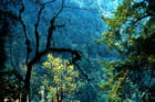 Les belles forêts de l'Helambu