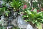 les belles plantes du Gumbalimbapark
