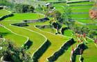 Les belles terrasses de riz
