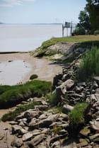 les bords de la Gironde