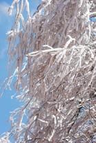 Les branches givrées
