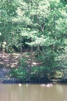 les canards du lac Les Sources à Cestas