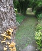 Les champignons sur l'arbre