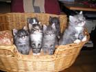 Les chatons de vanda