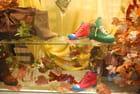 les chaussures dans la vitrine