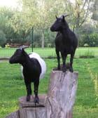 Les chèvres du Parc Corbière