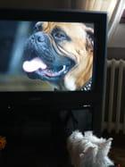 Les chiens et la télévision