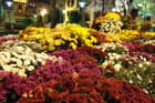 Les chrysantèmes