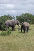 Les éléphants du parc Kruger