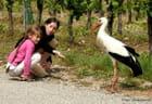 Les enfants et la cigogne.