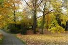 Les feuilles d'automne .....