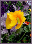 Les fleurs de Martigues