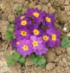 Les fleurs de mon jardin !