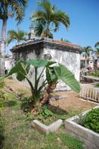 les fleurs du cimetière marin de Saint paul