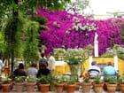 Les fleurs du grand jardin