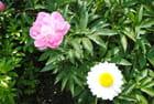 les fleurs du jardin de Marie
